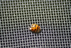 stainless-steel-insect-screen-2